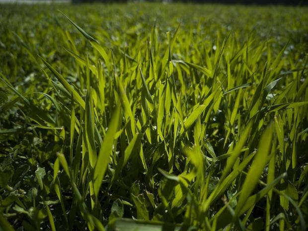 grass-4068585_1920.jpg
